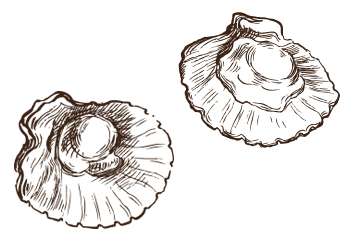 US Scallop Import